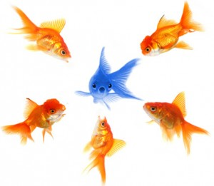 Five gold fish one blue fish