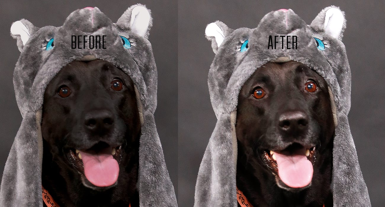 Black Dog With Tounge Out Wearing A Animal Hat