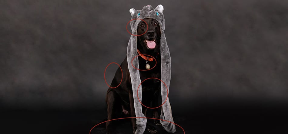 Photo Editing Of Black Dog With Red Circles Around Areas That Should Be Edited In Photoshop