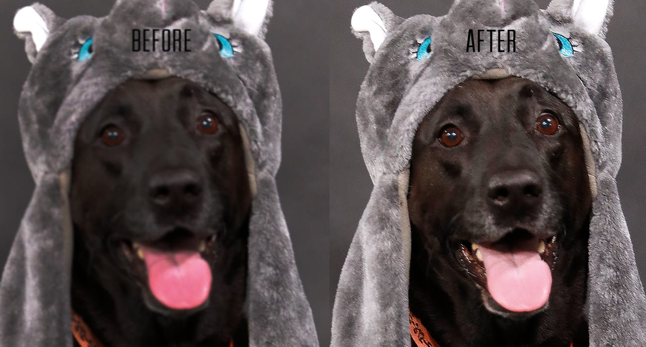 Photo Editing Before And After Example Of Editing Color With Black Dog Wearing A Animal Hat